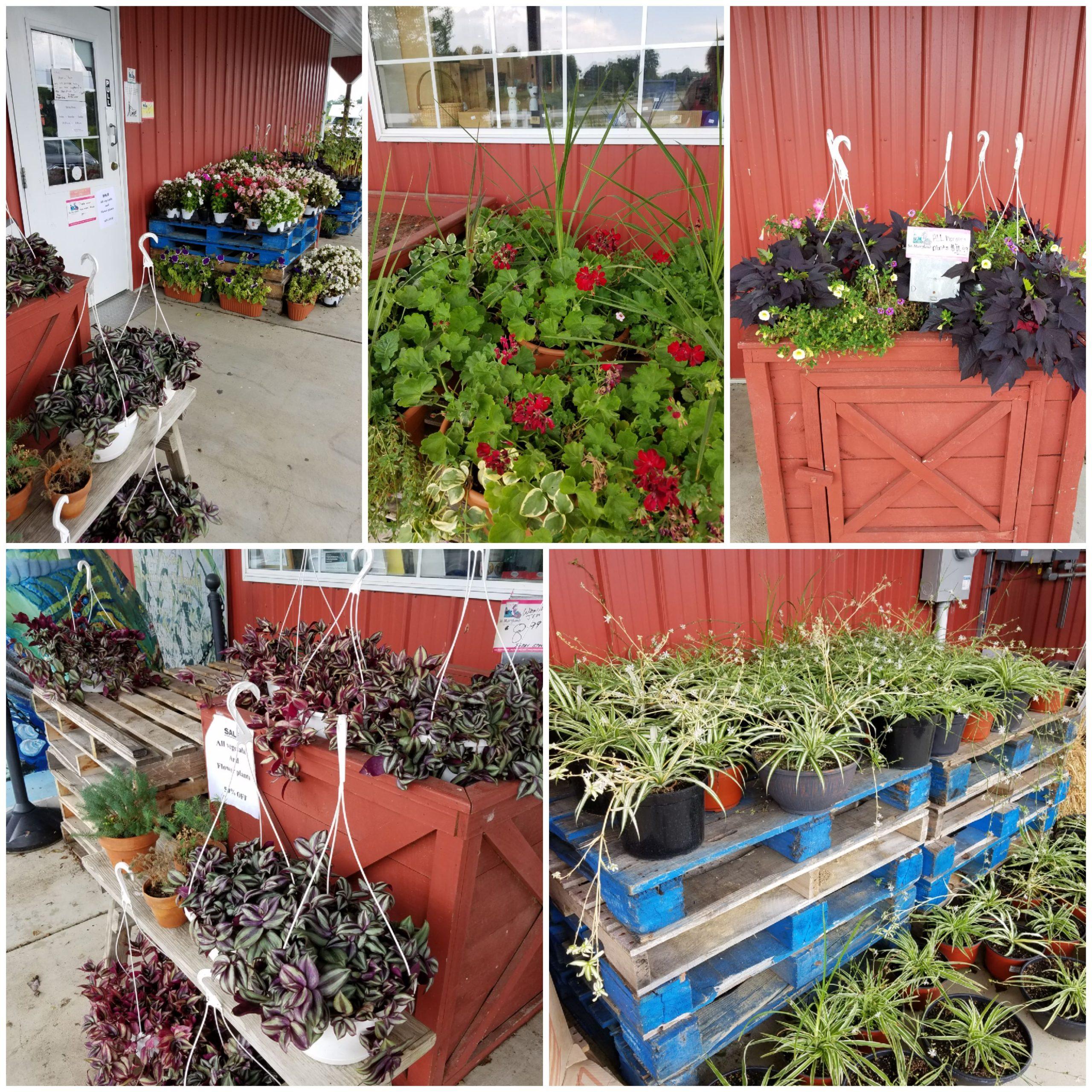 Plant sale! 50% off all flowers & vegetable plants